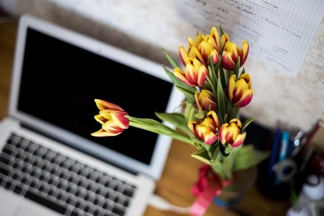 bloemen mooi houden in de hitte